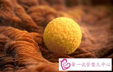 什么是优势卵泡?怎样有助优势卵泡生长?